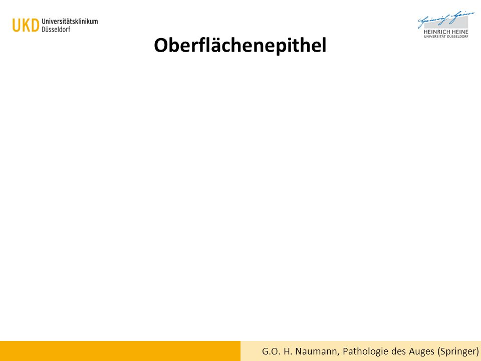Oberflächenepithel G.O. H. Naumann, Pathologie des Auges (Springer)