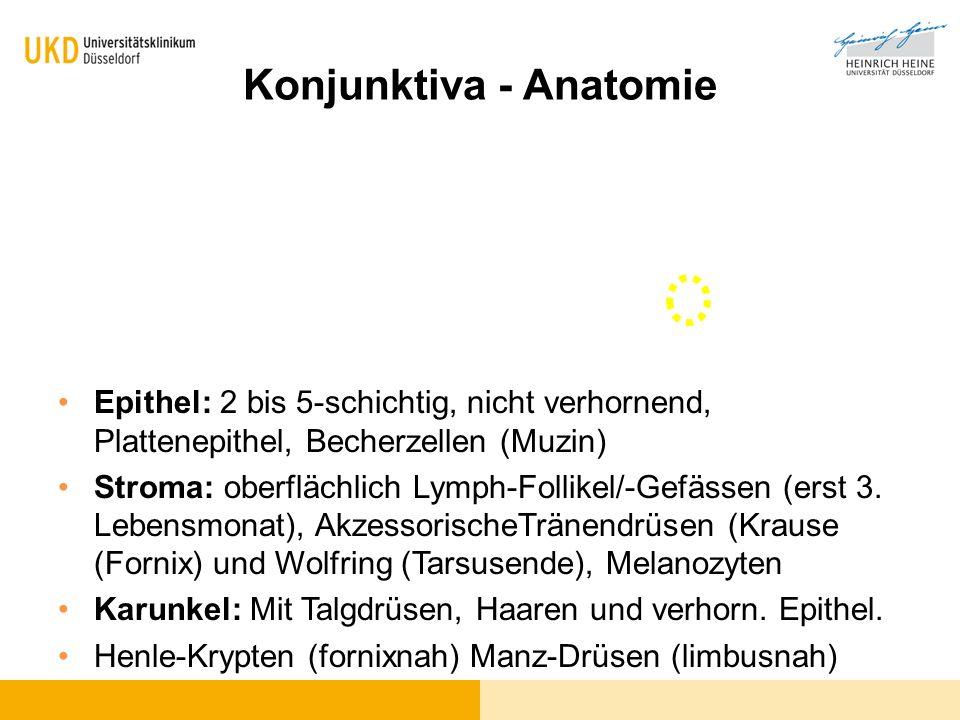 Konjunktiva - Anatomie Epithel: 2 bis 5-schichtig, nicht verhornend, Plattenepithel, Becherzellen (Muzin) Stroma: oberflächlich Lymph-Follikel/-Gefäss