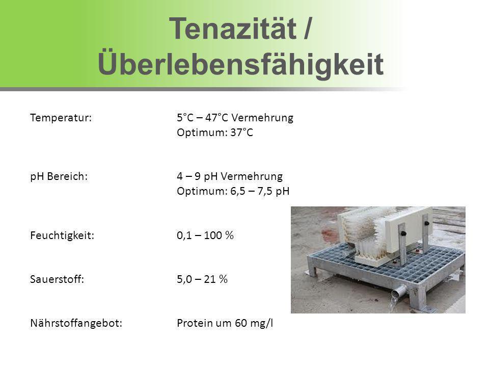 Temperatur: 5°C – 47°C Vermehrung Optimum: 37°C pH Bereich: 4 – 9 pH Vermehrung Optimum: 6,5 – 7,5 pH Feuchtigkeit:0,1 – 100 % Sauerstoff:5,0 – 21 % N