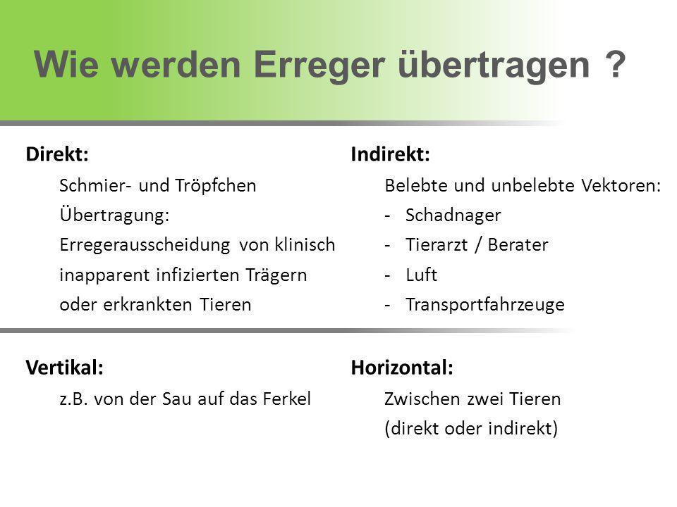 Bei Identifizierung: Beseitigung der Eintragsquelle Zur Unterbrechung von Infektionsketten 1.Überprüfung der allgemeinen Hygiene 2.Impfung von Sauen, Jungsauen, Ferkeln .