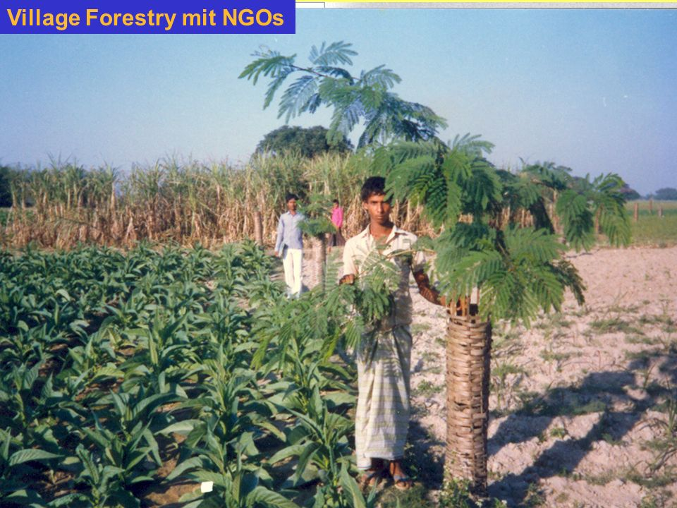Village Forestry mit NGOs