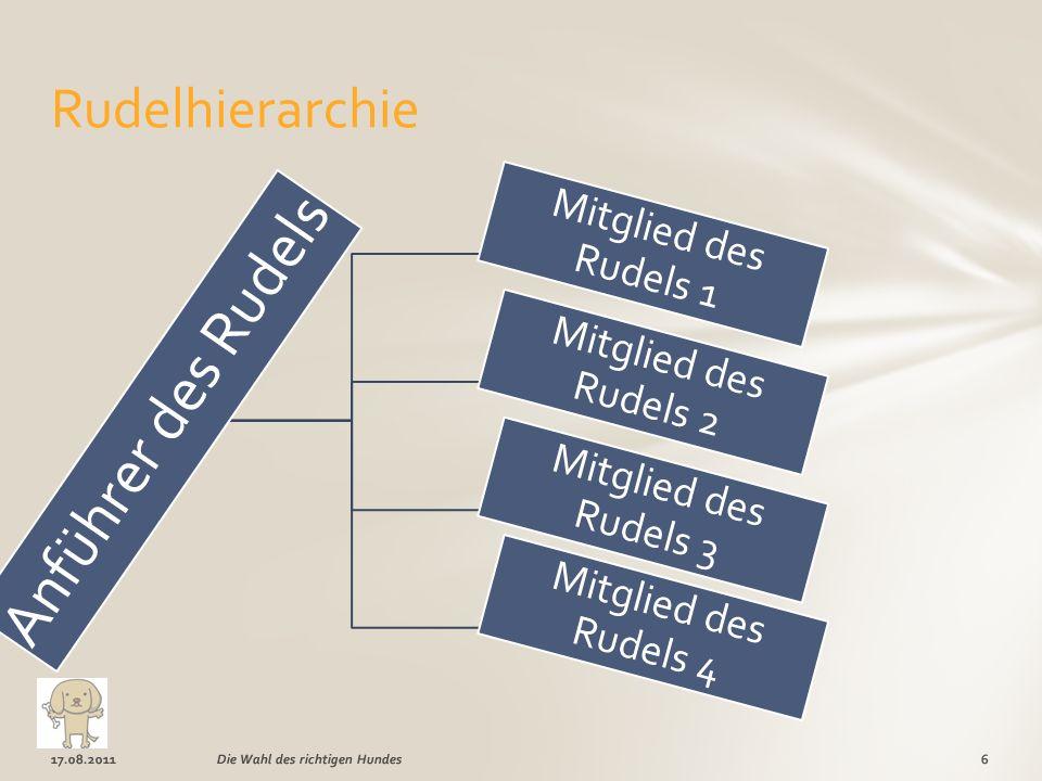 Anführer des Rudels Mitglied des Rudels 1 Mitglied des Rudels 2 Mitglied des Rudels 3 Mitglied des Rudels 4 17.08.20116Die Wahl des richtigen Hundes Rudelhierarchie