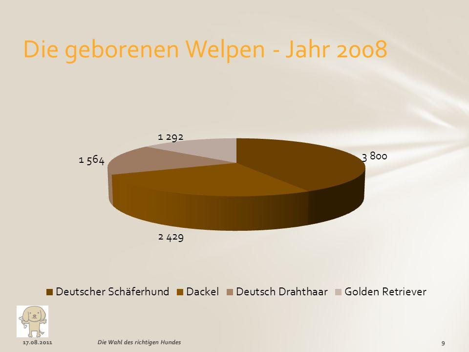17.08.20119Die Wahl des richtigen Hundes Die geborenen Welpen - Jahr 2008