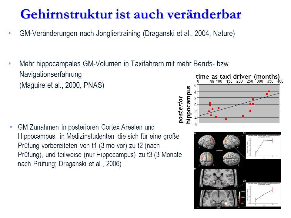 GM-Veränderungen nach Jongliertraining (Draganski et al., 2004, Nature) Mehr hippocampales GM-Volumen in Taxifahrern mit mehr Berufs- bzw. Navigations