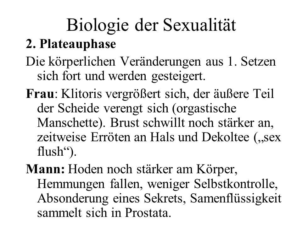 Biologie der Sexualität 2. Plateauphase Die körperlichen Veränderungen aus 1. Setzen sich fort und werden gesteigert. Frau: Klitoris vergrößert sich,