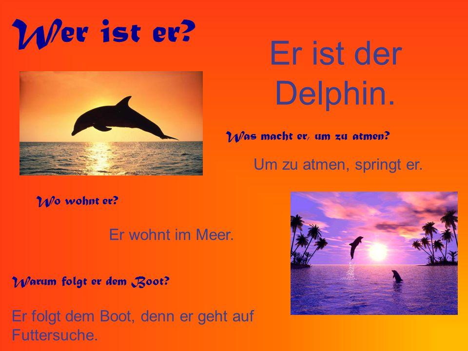 Er ist der Delphin. Wer ist er? Was macht er, um zu atmen? Um zu atmen, springt er. Wo wohnt er? Er wohnt im Meer. Warum folgt er dem Boot? Er folgt d