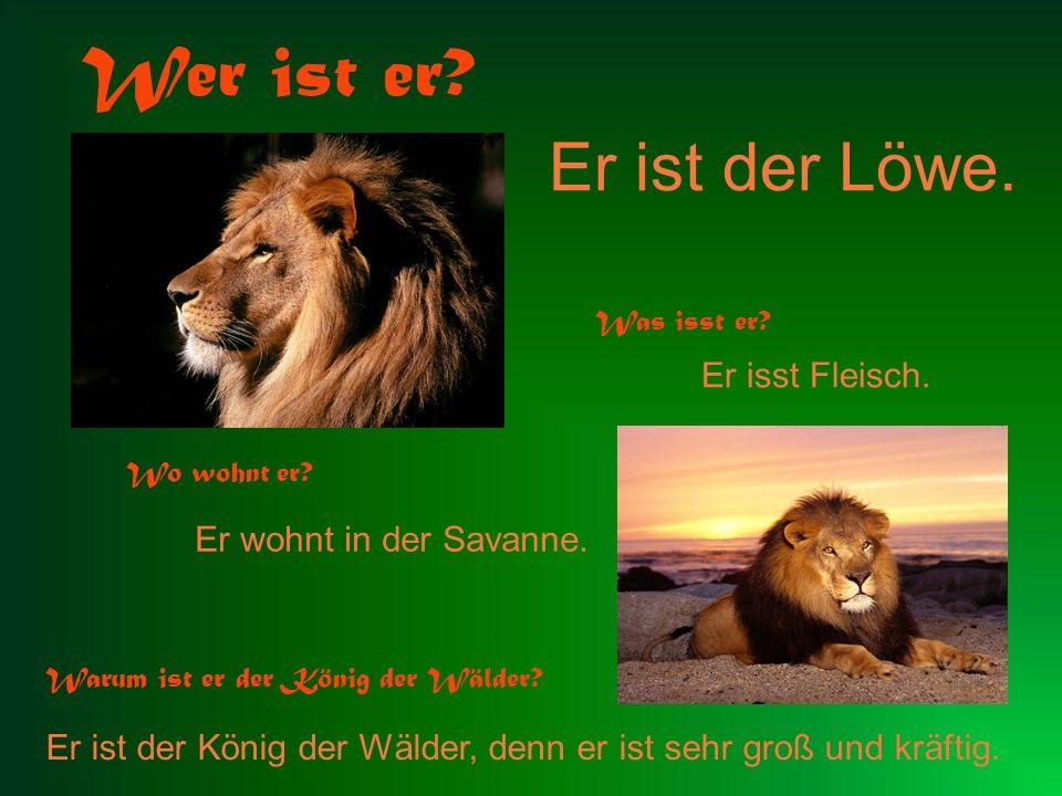 Er ist der Löwe. Wer ist er? Was isst er? Er isst Fleisch. Wo wohnt er? Er wohnt in der Savanne. Warum ist er der König der Wälder? Er ist der König d