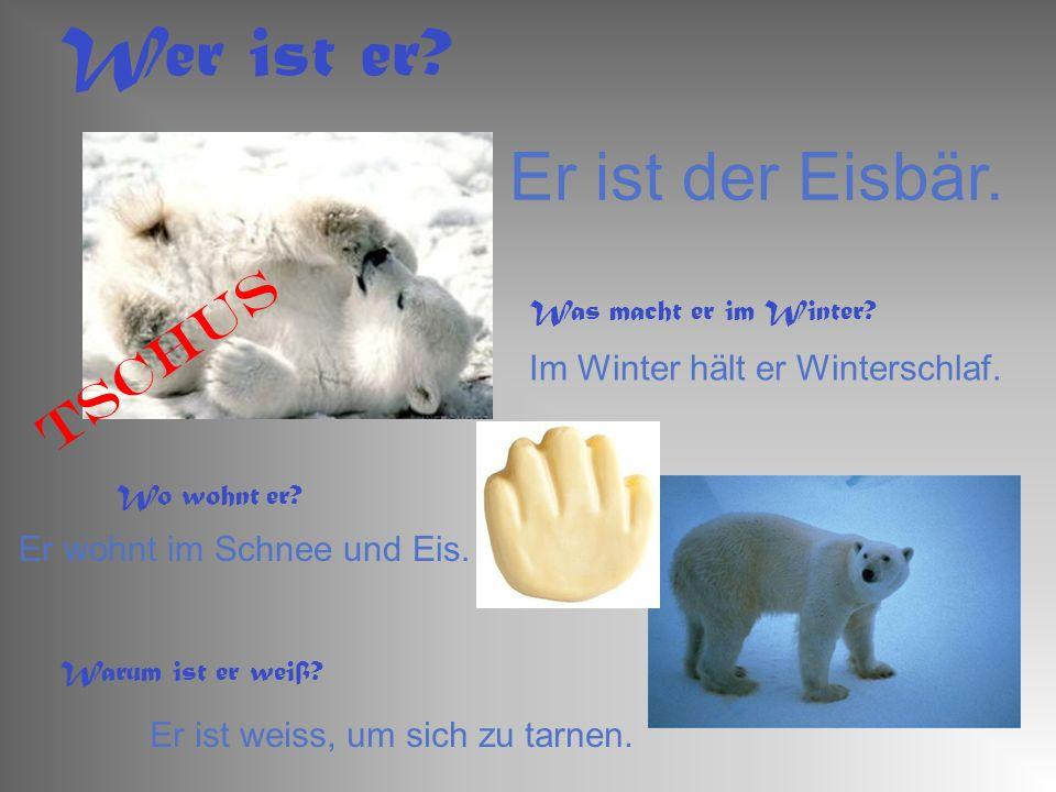Er ist der Eisbär. Wer ist er? Was macht er im Winter? Im Winter hält er Winterschlaf. Wo wohnt er? Er wohnt im Schnee und Eis. Warum ist er weiß? Er