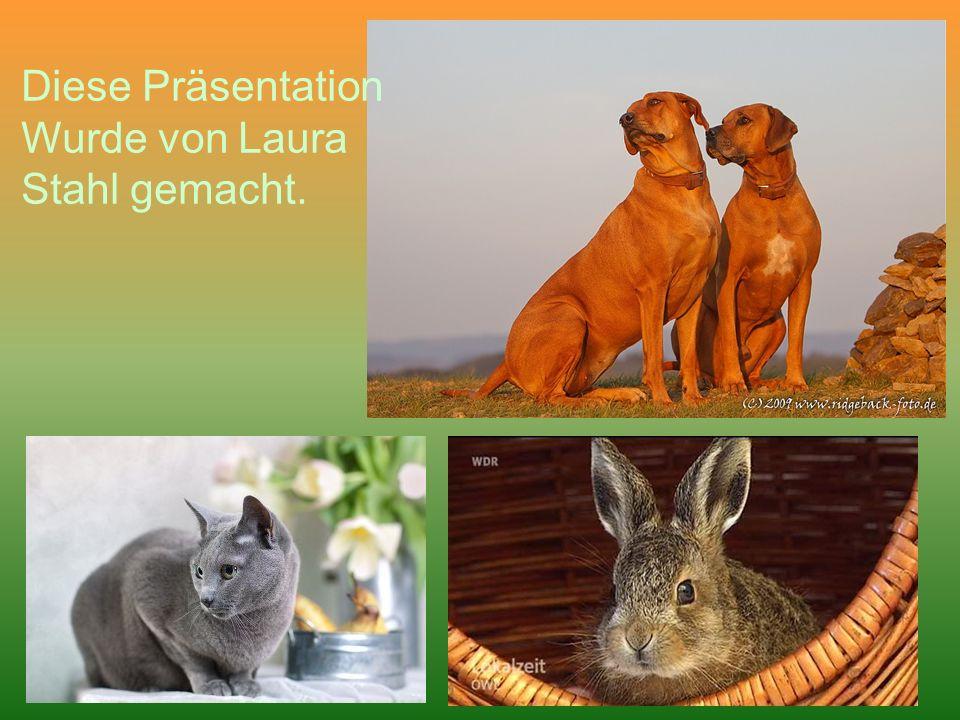 Diese Präsentation Wurde von Laura Stahl gemacht.