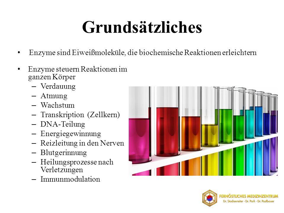 Grundsätzliches Enzyme steuern Reaktionen im ganzen Körper – Verdauung – Atmung – Wachstum – Transkription (Zellkern) – DNA-Teilung – Energiegewinnung