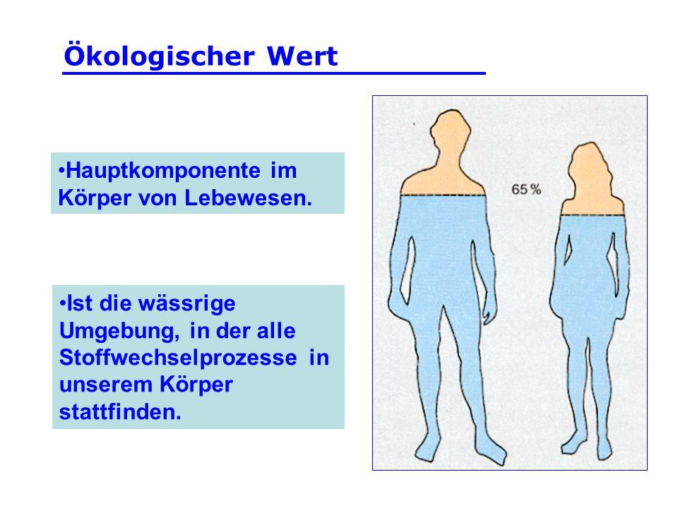 Hauptkomponente im Körper von Lebewesen. Ist die wässrige Umgebung, in der alle Stoffwechselprozesse in unserem Körper stattfinden. Ökologischer Wert