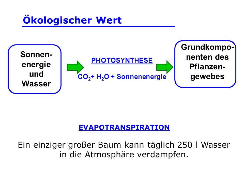 EVAPOTRANSPIRATION Ein einziger großer Baum kann täglich 250 l Wasser in die Atmosphäre verdampfen. Sonnen- energie und Wasser PHOTOSYNTHESE CO 2 + H