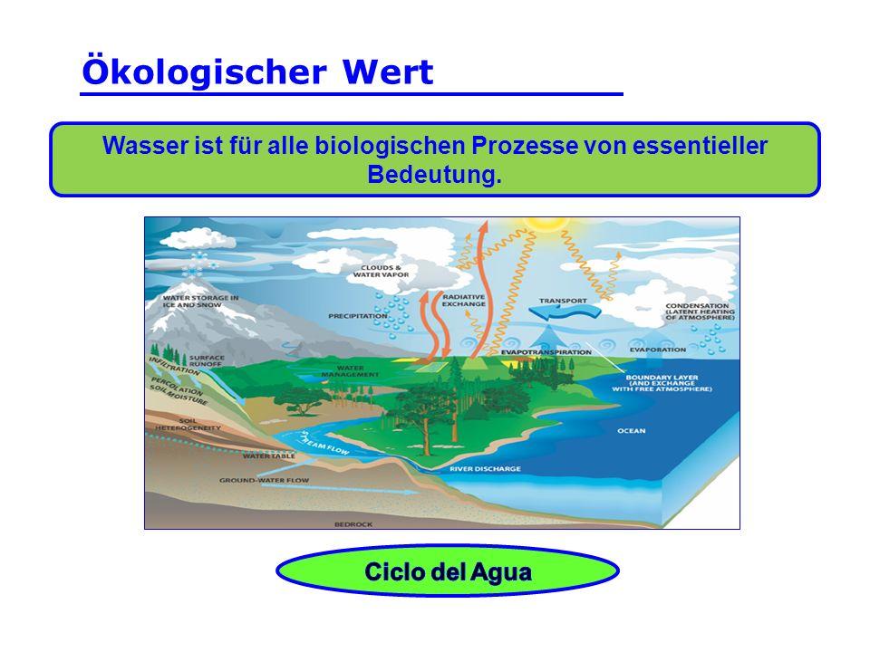 Wasser ist für alle biologischen Prozesse von essentieller Bedeutung.. Ökologischer Wert