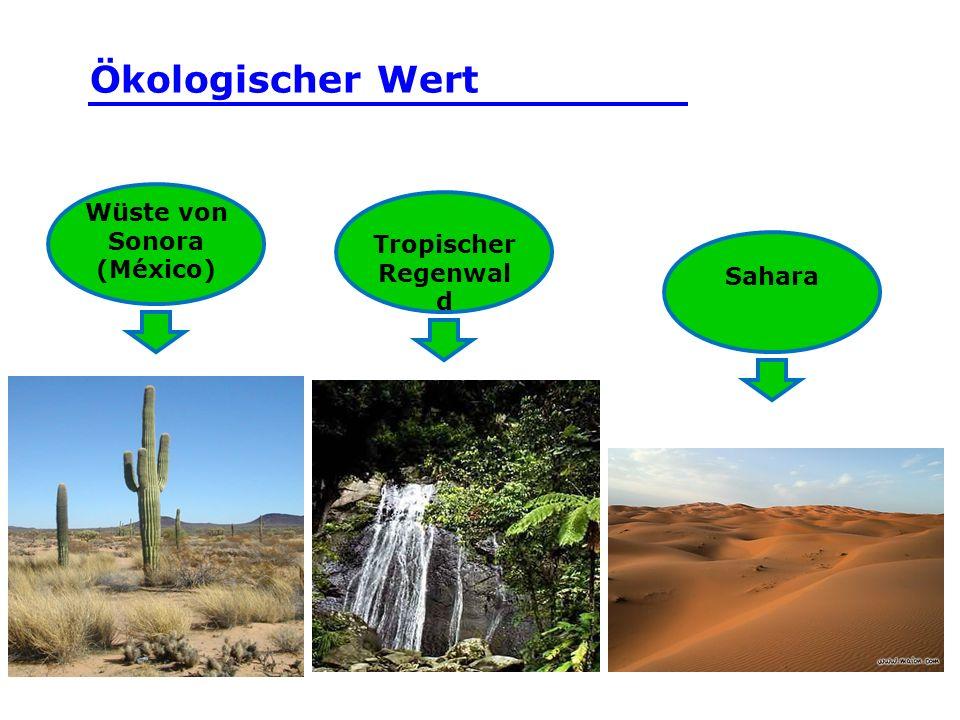 Wüste von Sonora (México) Tropischer Regenwal d Sahara Ökologischer Wert