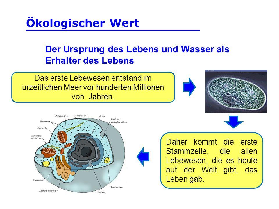 Der Ursprung des Lebens und Wasser als Erhalter des Lebens Das erste Lebewesen entstand im urzeitlichen Meer vor hunderten Millionen von Jahren. Daher