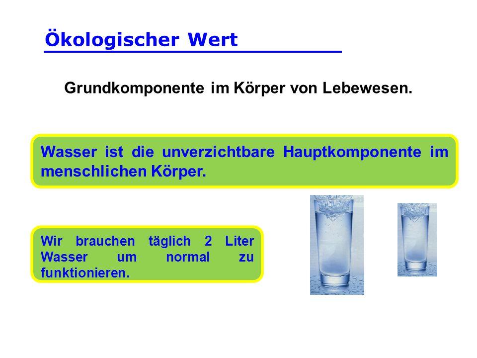 Wasser ist die unverzichtbare Hauptkomponente im menschlichen Körper. Grundkomponente im Körper von Lebewesen. Wir brauchen täglich 2 Liter Wasser um