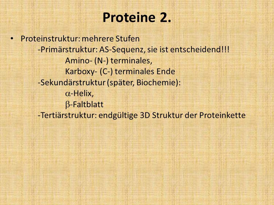 Proteine 2. Proteinstruktur: mehrere Stufen -Primärstruktur: AS-Sequenz, sie ist entscheidend!!! Amino- (N-) terminales, Karboxy- (C-) terminales Ende