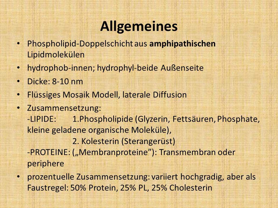 Allgemeines Phospholipid-Doppelschicht aus amphipathischen Lipidmolekülen hydrophob-innen; hydrophyl-beide Außenseite Dicke: 8-10 nm Flüssiges Mosaik