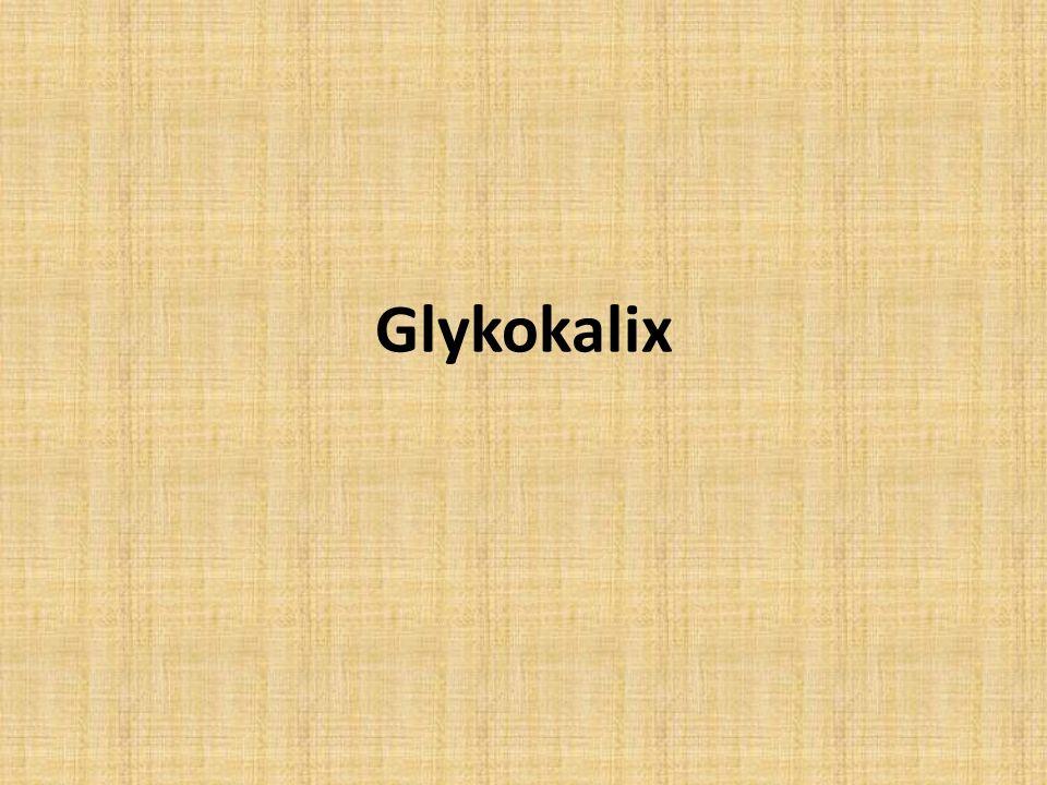 Glykokalix