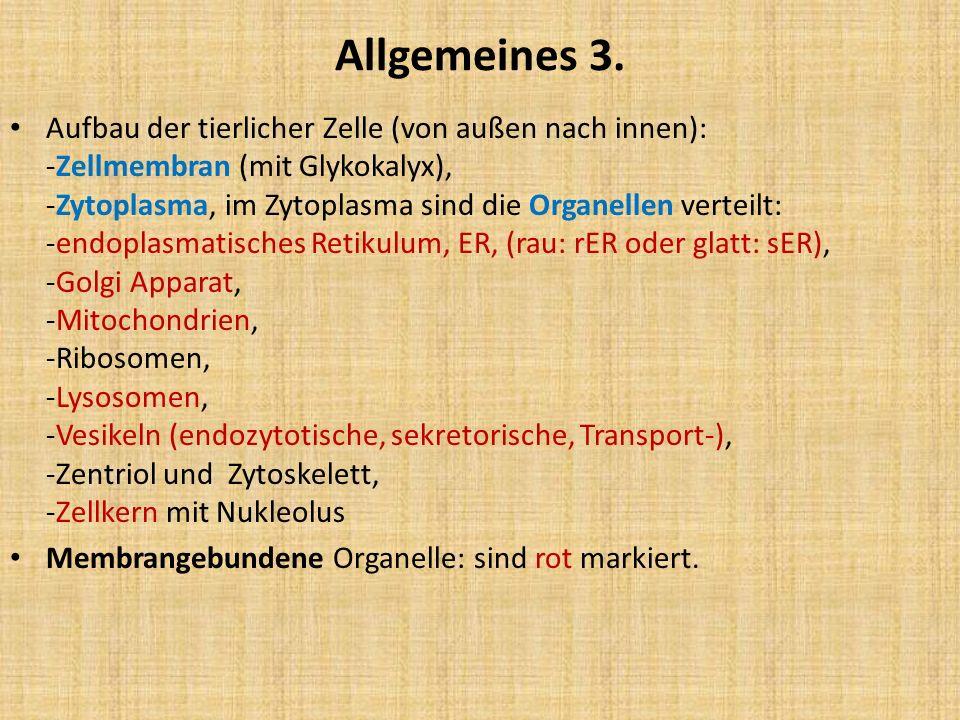 Allgemeines 4.
