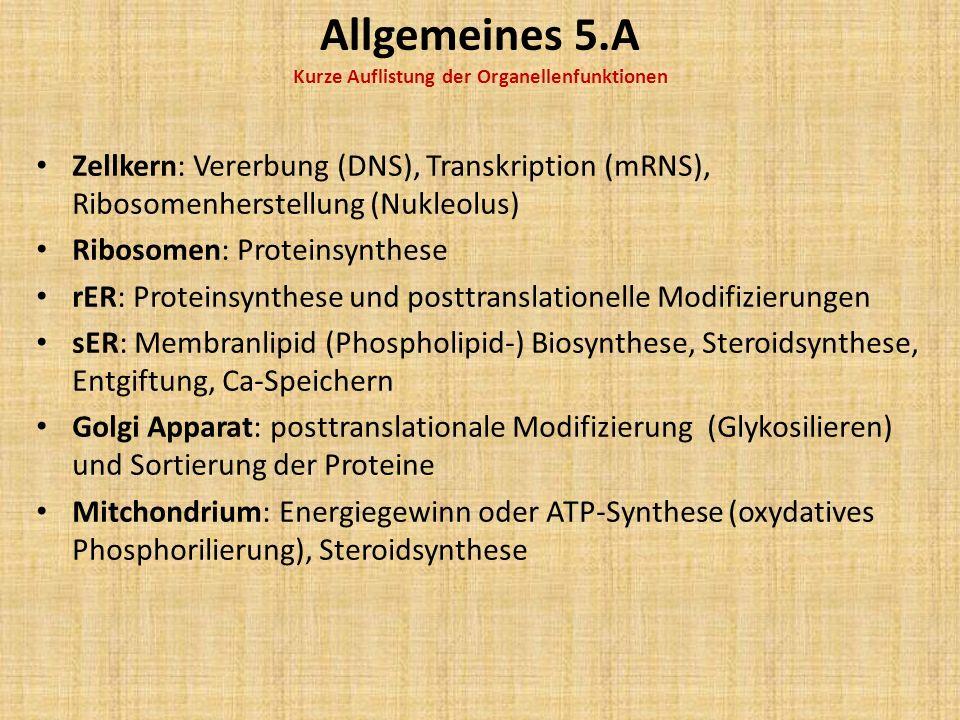 Allgemeines 5.A Kurze Auflistung der Organellenfunktionen Zellkern: Vererbung (DNS), Transkription (mRNS), Ribosomenherstellung (Nukleolus) Ribosomen: