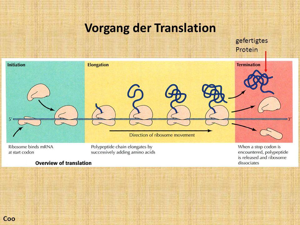 Vorgang der Translation gefertigtes Protein