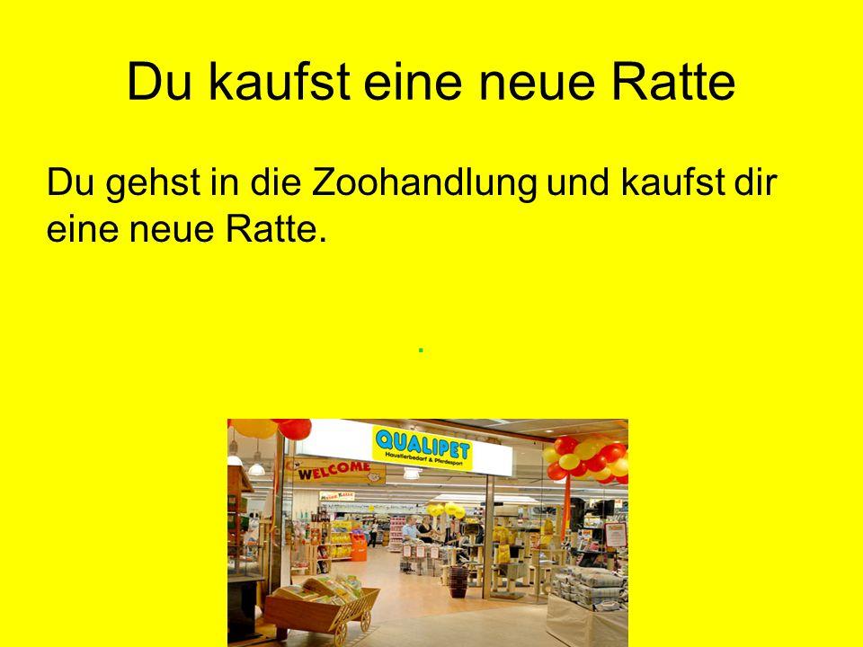 Du kaufst eine neue Ratte Du gehst in die Zoohandlung und kaufst dir eine neue Ratte.
