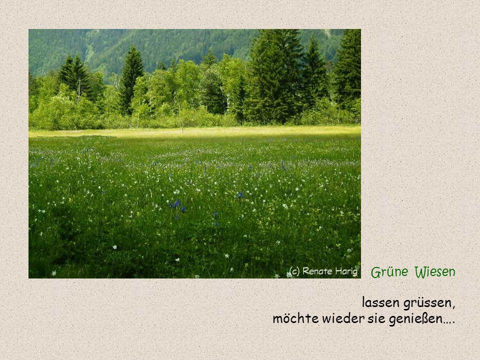 Grüne Wiesen lassen grüssen, möchte wieder sie genießen….