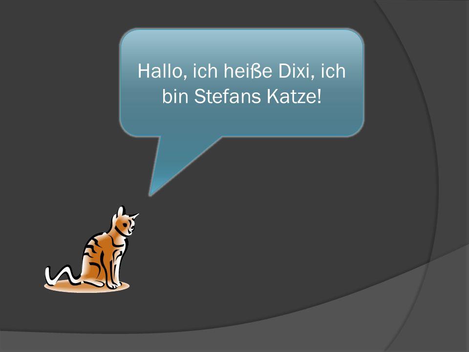 Hallo, ich heiße Dixi, ich bin Stefans Katze!