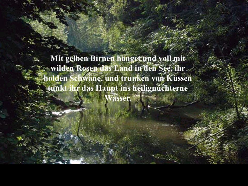 Mit gelben Birnen hänget und voll mit wilden Rosen das Land in den See, ihr holden Schwäne, und trunken von Küssen tunkt ihr das Haupt ins heilignüchterne Wasser.