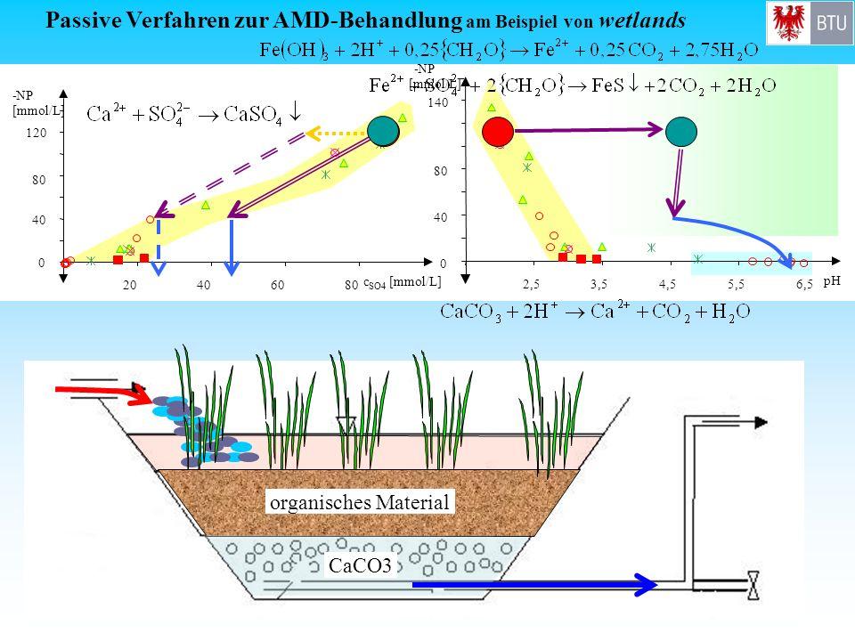 organisches Material CaCO3 Passive Verfahren zur AMD-Behandlung am Beispiel von wetlands 0 40 80 120 -NP [mmol/L] 20406080 c SO4 [mmol/L]