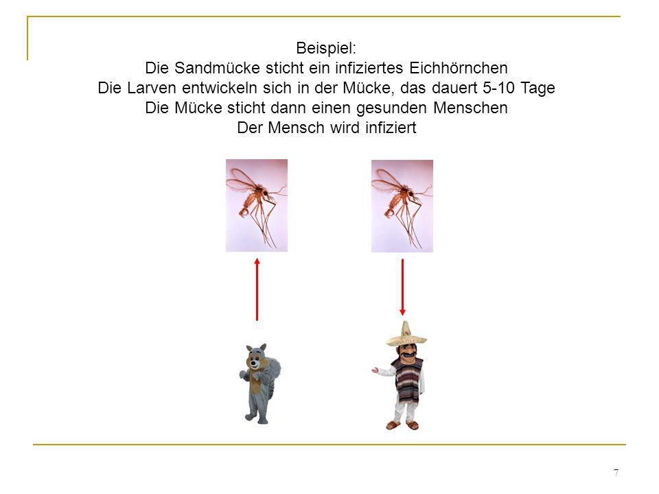 7 Beispiel: Die Sandmücke sticht ein infiziertes Eichhörnchen Die Larven entwickeln sich in der Mücke, das dauert 5-10 Tage Die Mücke sticht dann eine