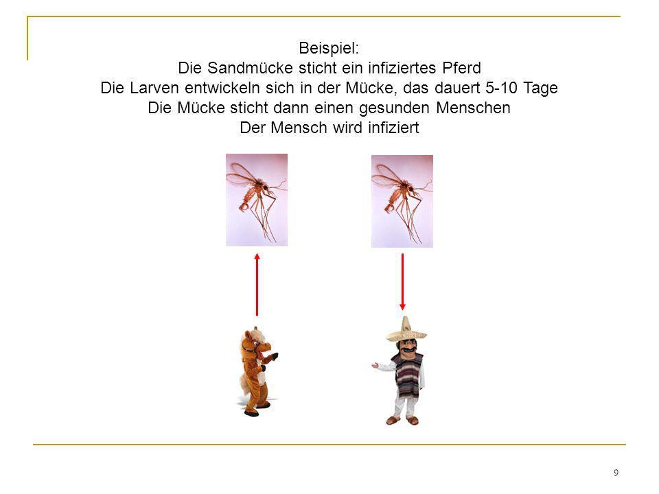 9 Beispiel: Die Sandmücke sticht ein infiziertes Pferd Die Larven entwickeln sich in der Mücke, das dauert 5-10 Tage Die Mücke sticht dann einen gesun