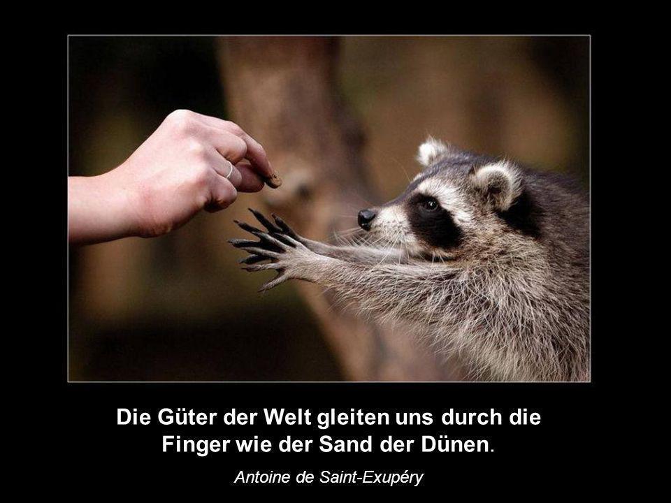 Die Güter der Welt gleiten uns durch die Finger wie der Sand der Dünen. Antoine de Saint-Exupéry