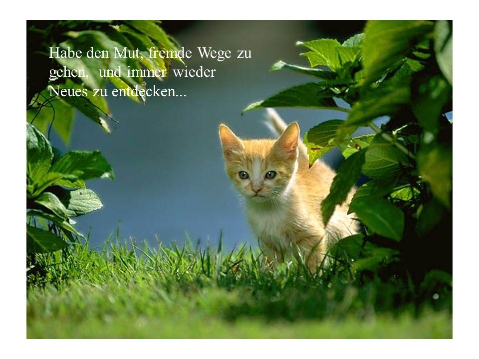 Habe den Mut, fremde Wege zu gehen, und immer wieder Neues zu entdecken...