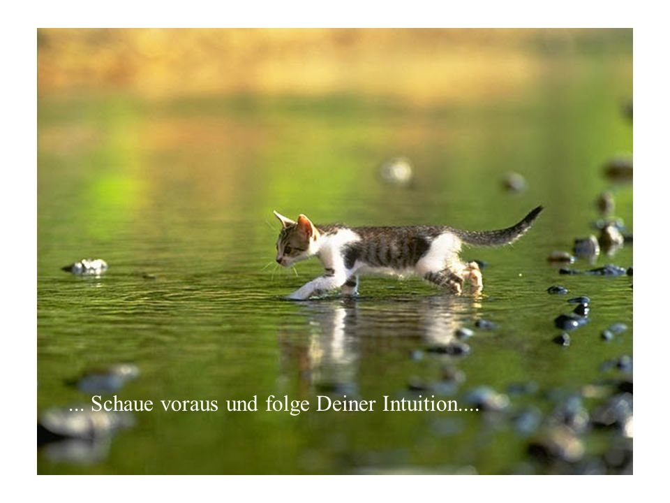 ... Schaue voraus und folge Deiner Intuition....