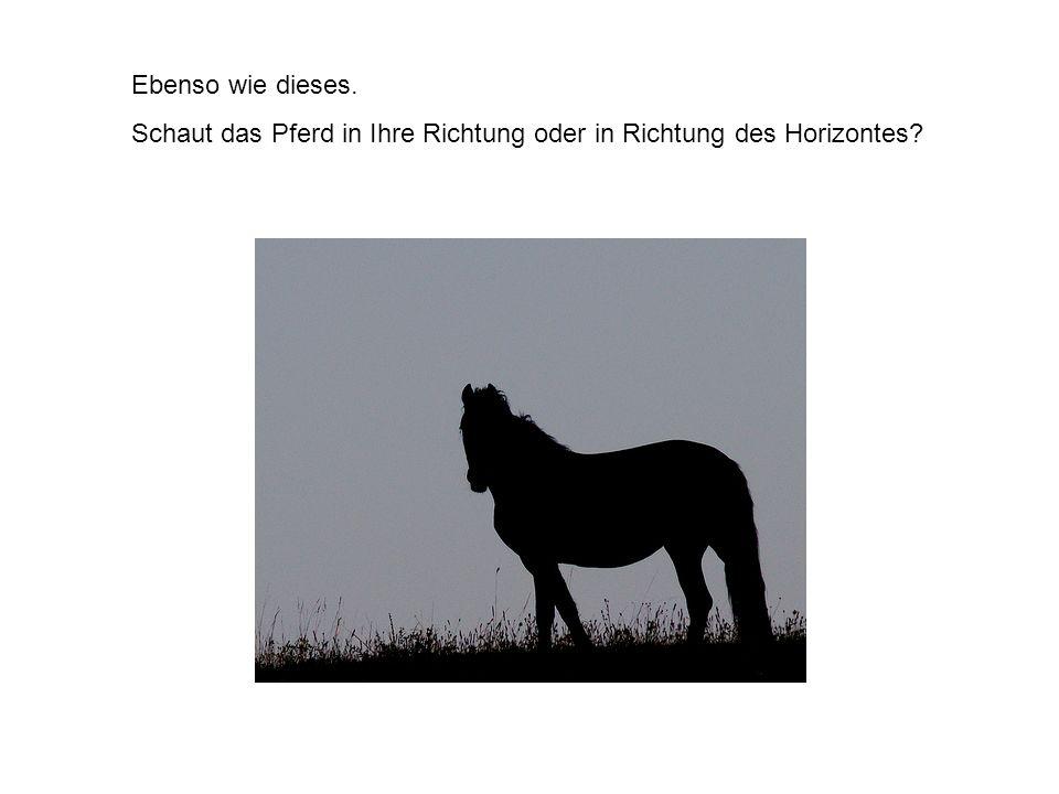Ebenso wie dieses. Schaut das Pferd in Ihre Richtung oder in Richtung des Horizontes?