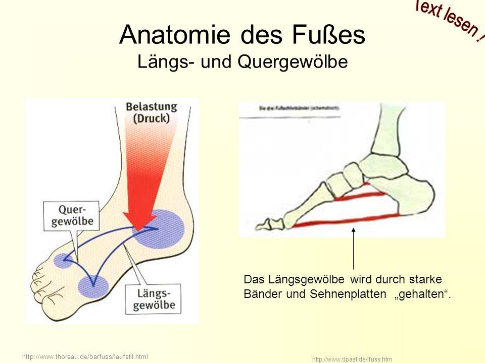 Anatomie des Fußes Längs- und Quergewölbe http://www.thoreau.de/barfuss/laufstil.html http://www.dpast.de/lfuss.htm Das Längsgewölbe wird durch starke Bänder und Sehnenplatten gehalten.