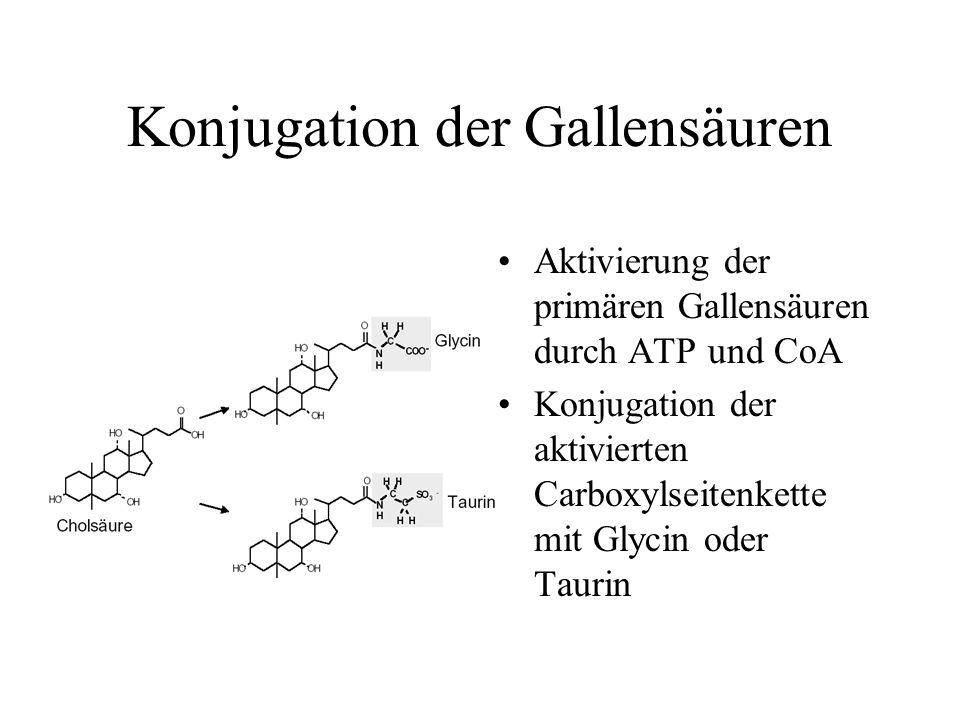 Konjugation der Gallensäuren Aktivierung der primären Gallensäuren durch ATP und CoA Konjugation der aktivierten Carboxylseitenkette mit Glycin oder T