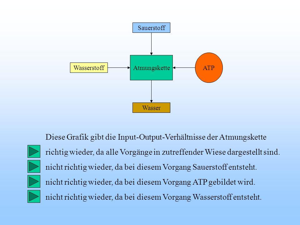 ATP Wasserstoff Sauerstoff Wasser Atmungskette Diese Grafik gibt die Input-Output-Verhältnisse der Atmungskette richtig wieder, da alle Vorgänge in zu