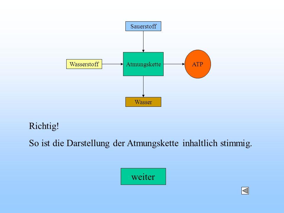ATP Wasserstoff Sauerstoff Wasser Atmungskette Richtig! So ist die Darstellung der Atmungskette inhaltlich stimmig. weiter