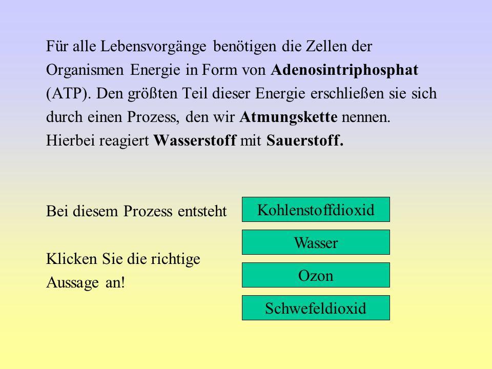 Für alle Lebensvorgänge benötigen die Zellen der Organismen Energie in Form von Adenosintriphosphat (ATP). Den größten Teil dieser Energie erschließen