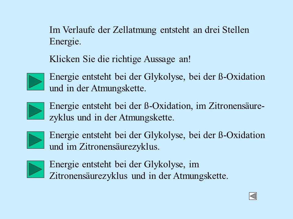 Im Verlaufe der Zellatmung entsteht an drei Stellen Energie. Klicken Sie die richtige Aussage an! Energie entsteht bei der Glykolyse, bei der ß-Oxidat