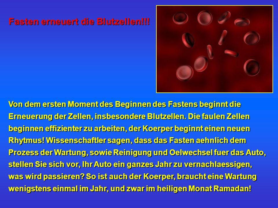 Fasten erneuert die Blutzellen!!! Von dem ersten Moment des Beginnen des Fastens beginnt die Erneuerung der Zellen, insbesondere Blutzellen. Die faule