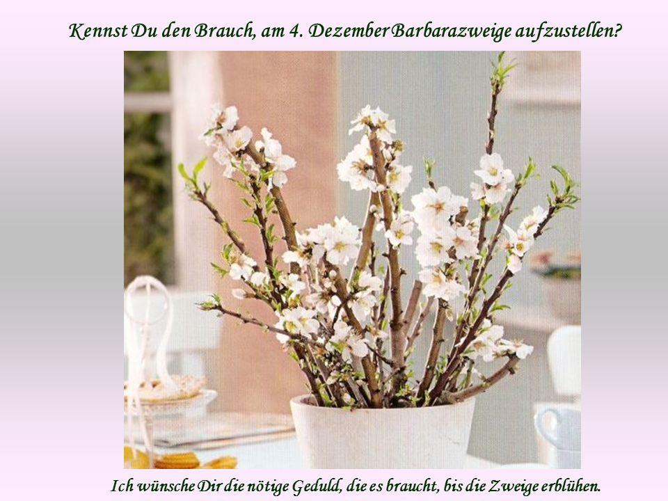 Kennst Du den Brauch, am 4. Dezember Barbarazweige aufzustellen? Ich wünsche Dir die nötige Geduld, die es braucht, bis die Zweige erblühen.