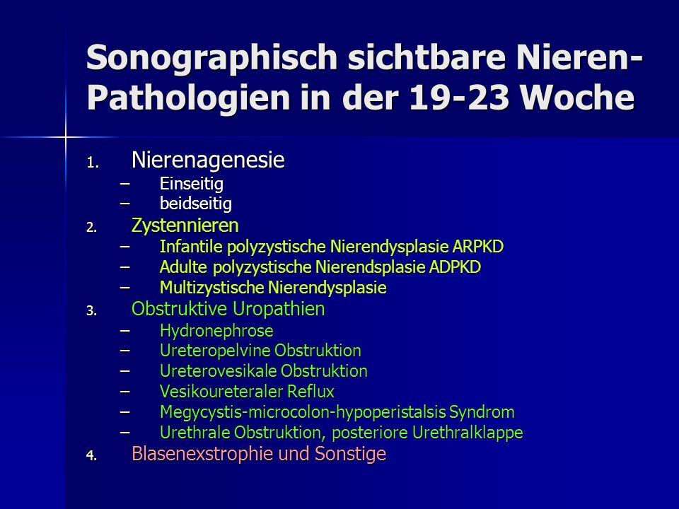 Sonographisch sichtbare Nieren- Pathologien in der 19-23 Woche 1. Nierenagenesie –Einseitig –beidseitig 2. Zystennieren –Infantile polyzystische Niere