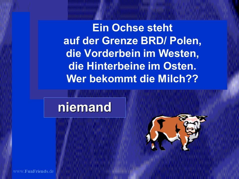 www.FunFriends.de Ein Ochse steht auf der Grenze BRD/ Polen, die Vorderbein im Westen, die Hinterbeine im Osten.