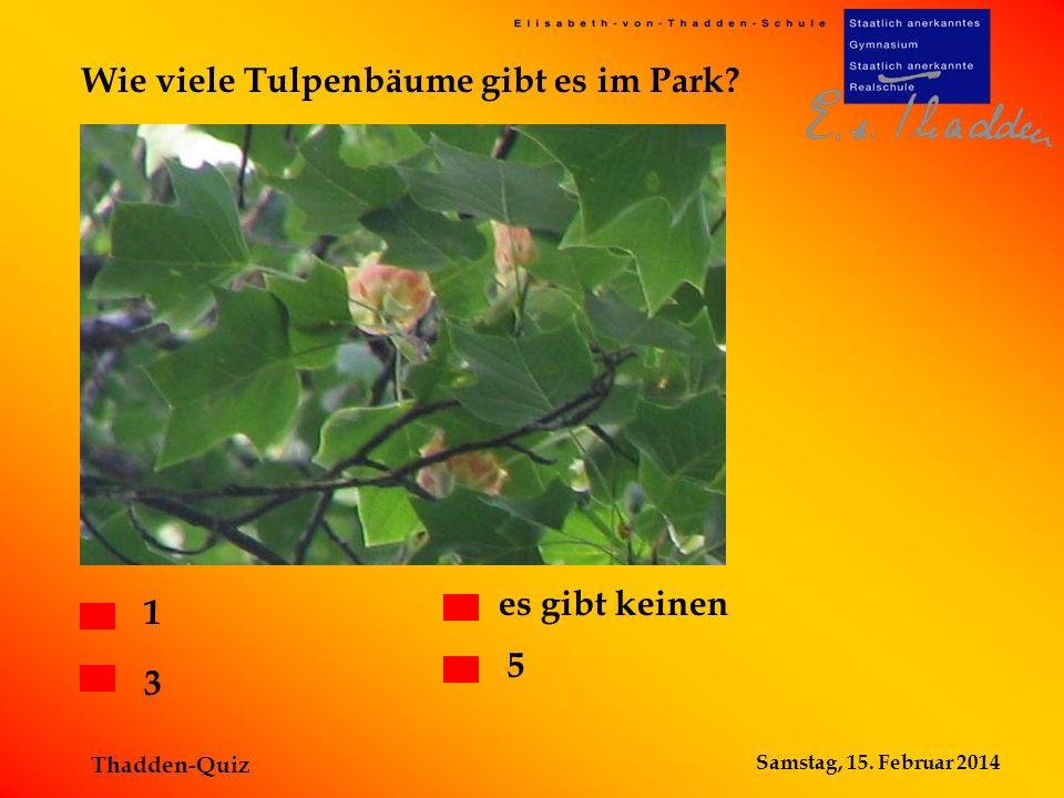 Samstag, 15. Februar 2014 Thadden-Quiz Wie viele Tulpenbäume gibt es im Park? 1 3 es gibt keinen 5