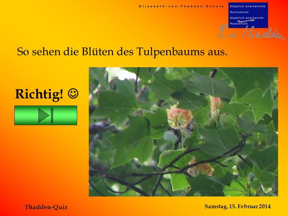 Samstag, 15. Februar 2014 Thadden-Quiz Richtig! So sehen die Blüten des Tulpenbaums aus.