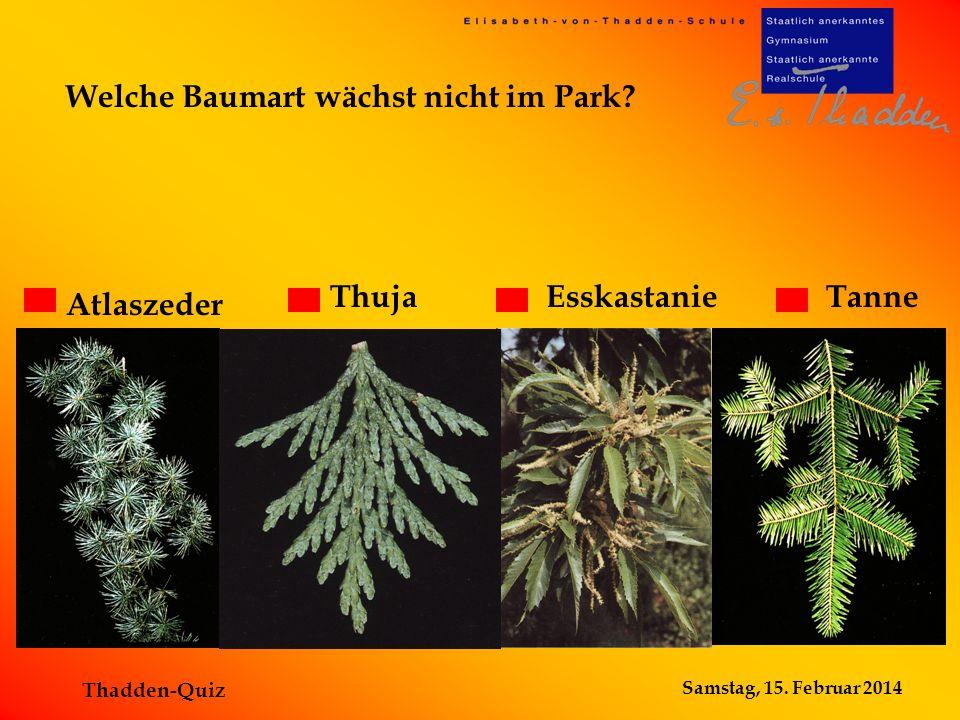 Samstag, 15. Februar 2014 Thadden-Quiz Welche Baumart wächst nicht im Park? TanneThujaEsskastanie Atlaszeder